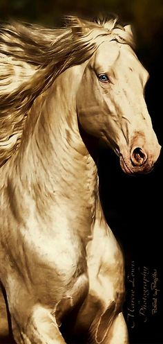 Horse Art - The Golden Horse - by Marcie Lewis - from Regilla