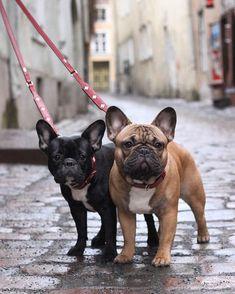 Lola & Pepe