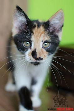 Tiffany is looking for a home ... #cute #cutecats #cats #caturday #kot #koty #neko #gato #katz #katzen #kittens #chat