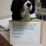 At the vet - yet again!