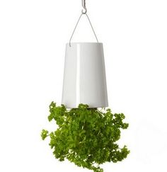 Sky Planters are a great way to maximise space as you are hanging plants from the ceiling without losing floor space. Each Sky Planter comes with the Slo-Flo internal irrigation system feeds water directly to the plant's roots, limiting evaporation and dripping. http://www.harrodhorticultural.com/sky-planters-pid9295.html  Sky Planters - Harrod Horticultural