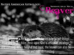 The Beaver is a hard worker who knows how the get things done and to get them done right.  She is efficient, strategic and cunning.  While helpful and loyal, the Beaver can also be possessive and over-demanding.