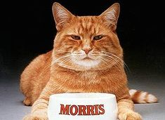 Morris the Cat. He was finicky. My son now has a cat (Oscar) that looks just like Morris and twice as finicky!