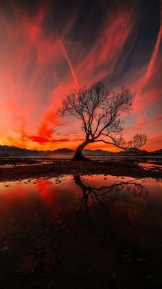 The Tree, Wanaka, New Zealand, Vertical Panorama – Photography Scenery Photography, Landscape Photography Tips, Amazing Photography, Photography Jobs, Travel Photography, Photography Backdrops, Beautiful Nature Photography, Photography Contract, Photography Business