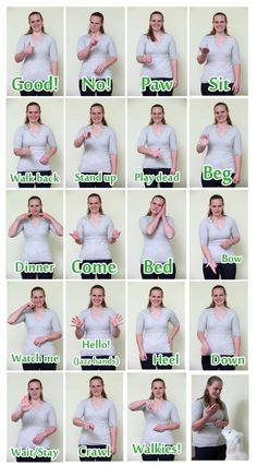 Sign language for dogs...yes they can learn ASL. You teach them the same as you would with a verbal command.