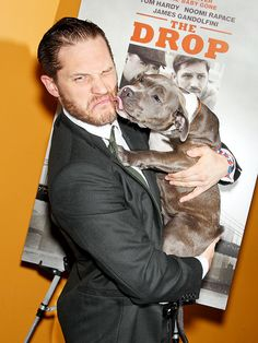 An affectionate pup lays a wet one on Tom Hardy Monday at a New York screening of his new drama The Drop, in which the actor plays a bartender who takes in a pit bull he finds abandoned in the trash. Tom Hardy The Drop, Tom Hardy Dog, Tom Hardy Actor, Aaron Taylor Johnson, Chris Evans, Pit Bull Love, 10 Picture, Raining Men, Mans Best Friend