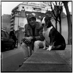 photos english bull terrier