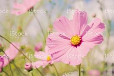 Wellbeing & Mindfulness Images (@wellness_images) • Instagram photos and videos Cosmos Flowers, Video Image, Flower Beds, Photo Illustration, Image Now, Background Images, Royalty Free Images, Stock Photos, Photo And Video