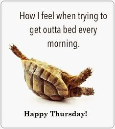 How I Feel Getting Out Of Bed good morning thursday thursday quotes good morning. - How I Feel Getting Out Of Bed good morning thursday thursday quotes good morning quotes happy thurs - Funny Thursday Quotes, Thursday Meme, Thursday Greetings, Funny Quotes, Funny Humor, Ecards Humor, Dog Humour, Thursday Images, Sarcastic Sayings