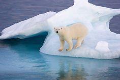 Arctic Photographs