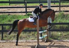 Combining Flatwork + Fences: 3 Suppling Exercises for Jumping Horses