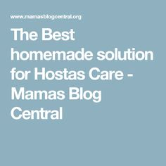 The Best homemade solution for Hostas Care - Mamas Blog Central