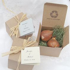 Tulip Bulb Favors for guests