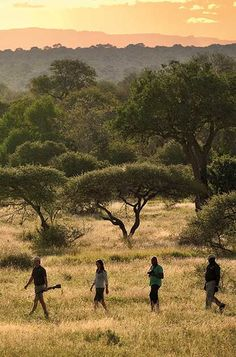 Walking safaris in the Sabi Sand and Kruger National Park