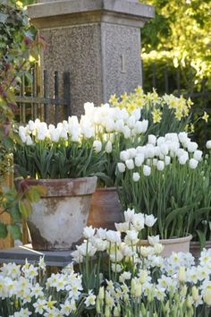 Spring display for front garden near front door, do repeating containers with the same flowers for an extra wow factor, or do 3 types of plants all with the same color of flowers.  Anybody tried this?