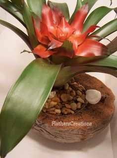 O que podemos fazer com a casca do coco?     Pesquisei pela Net e vi muita coisa bonita. Trouxe algumas ideias de como reutilizar a casca ...