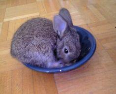 Clara als Kaninchenbaby - erinnert ein bisschen an einen kleinen Koalabär