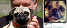 Robin Williams – A great man and pug lover
