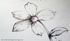 Example drawing of a flower in a pen and ink art using cross hatched method and basic line sketches. This drawing of a flower can be a good example of cool easy things to draw. Cool Easy Drawings, Waterman Pens, Chalk Art, Ink Art, Dandelion, Sketches, Flower Drawings, Flowers, Image