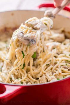 Chicken Tetrazzini is a comforting, cheesy, supremely creamy chicken pasta bake. This chicken pasta casserole will have your family refilling their bowls! | natashaskitchen.com Chicken Tetrazzini Casserole, Chicken Tetrazzini Recipes, Chicken Pasta Casserole, Casserole Dishes, Chicken Recipes, Turkey Tetrazzini, Shrimp Recipes, Kitchen Recipes, Cooking Recipes