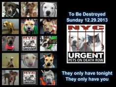 Here is NYC TO BE DESTROYED List for Sunday, December 29'13.    TWELVE BEAUTIFUL LIVES, These Dogs are Innocent & Do Not deserve this!   NO KILL SHELTERS ARE THE WAY !!!! https://www.facebook.com/media/set/?set=a.611290788883804.1073741851.152876678058553&type=3