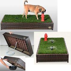 Indoor Dog Park, Dog Playground, Pet Hotel, Dog Potty, Dog Area, Dog Furniture, Dog Rooms, Dog Daycare, Dog Friends