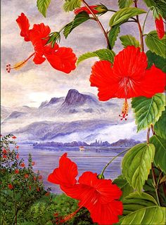Marianne North (1830 - 1890) These amapolas transport me immediately to Puerto Rico ....