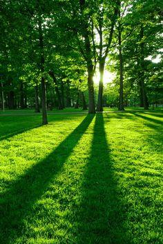 Park  #fototapeta #fototapety #park #drzewa #las