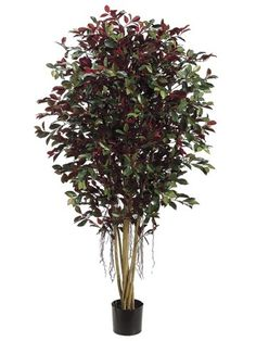 Pack of 2 Decorative Ficus Retusa Trees with Round Pots 5' >>> Be sure to check out this awesome product. Artificial Plants And Trees, Artificial Plant Wall, Artificial Tree, Artificial Flowers, Indoor Flowers, Indoor Plants, Ficus Retusa, Flowers Australia, Plant Wall Decor