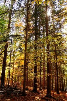 "Check out my art piece ""A Touch Of Gold"" on crated.com Puslinch Ontario Canada #art #photography #autumn #trees #nature"