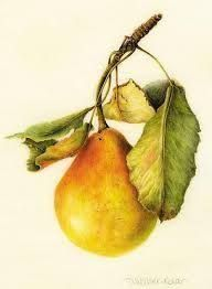 Bilderesultat for vintage fruits watercolour posters