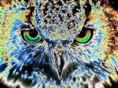 "Saatchi Online Artist TOULA MAVRIDOU-MESSER; Photography, ""Pop Art - Eagle Owl"" #art"