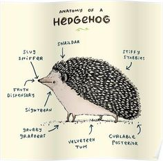 """""""Anatomy of a Hedgehog"""" art by Sophie Corrigan features a drawing of a cute hedgehog with words explaining its various body parts. Hedgehog Art, Cute Hedgehog, Hedgehog Tattoo, Pygmy Hedgehog, Hedgehog Drawing, Hedgehog Treats, Hedgehog Cupcake, Hedgehog Animal, Hedgehog House"""