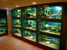 D.I.Y.'S (DO IT YOURSELF)   REPTILE ENCLOSURES