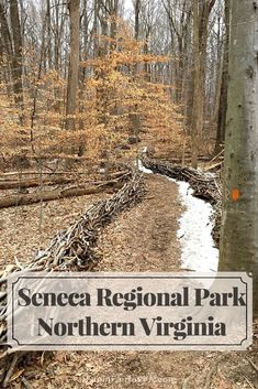 Seneca Regional Park in Northern Virginia offers hikers, birders, and equestrians beautiful woodland trails and an historic section of the Potomac River.