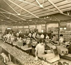 Women packing lemons at San Fernando Heights Lemon Company, circa 1930. The woman with her hair pulled back, packing the Sunkist crate is Luz Mendez Calvo. San Fernando Valley History Digital Library.