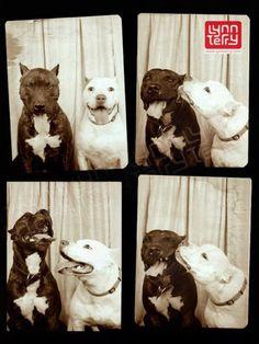 Está provado: cães são melhores que pessoas em cabines fotográficas