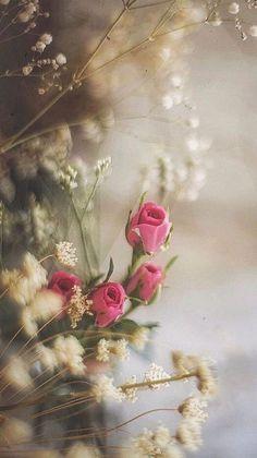 Beautiful Flowers Wallpapers, Beautiful Photos Of Nature, Beautiful Rose Flowers, Exotic Flowers, Love Flowers, Silk Flowers, Spring Flowers, Flower Phone Wallpaper, Anime Scenery Wallpaper