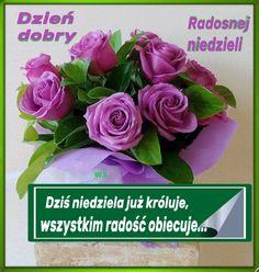Vegetables, Rose, Flowers, Plants, Blog, Polish, Pictures, Pink, Roses