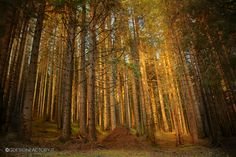 Deep forest by Virginio Perissinotto, via 500px
