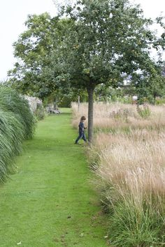 Feather reed grass calamagrostis x acutiflora 39 karl for Auzouville sur ry jardin plume