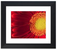 "11"" x 14"" Traditional Photography Prints / Wall Décor Nature Photograph: Nature's Beauty Red and Yellow Gerbera Daisy Flower. View all of the stunning Nature Photos by Landscape and Nature Photographer Melissa Fague at:  https://www.etsy.com/shop/PIPAFineart Limited edition fine art nature photography prints and canvas wraps are also available in a variety of sizes."