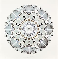 And for the back wall my favourite Damien Hirst