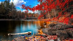 Autumn park foliage lake and red Trees Large Wall Art Print Canvas Print lake wall art lake Ca