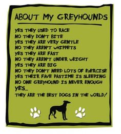 i must modify this. sighthounds are the best dogs on earth. thank you, j