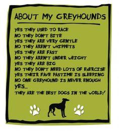 Soooo True. I love love love my greyhound :) I wish I could adopt them ALL !!!
