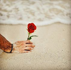 Hand Flowers, Flowers For You, Butterfly Flowers, Butterflies, Boys Dps, Red Roses, Beards, Annie, Girls