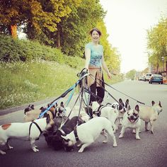 french bulldog HEAVEN...    SO MANY FRENCHIES!!!!