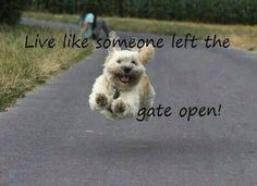 Funny life quotes with animals funny animal quotes for kids funny life quotes with animals . funny life quotes with animals Funny Dogs, Funny Animals, Cute Animals, Animals Dog, Dog Quotes, Funny Quotes, Life Quotes, Animal Quotes, Quotes About Animals