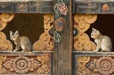 cat temple | temple cats by wanderluster44